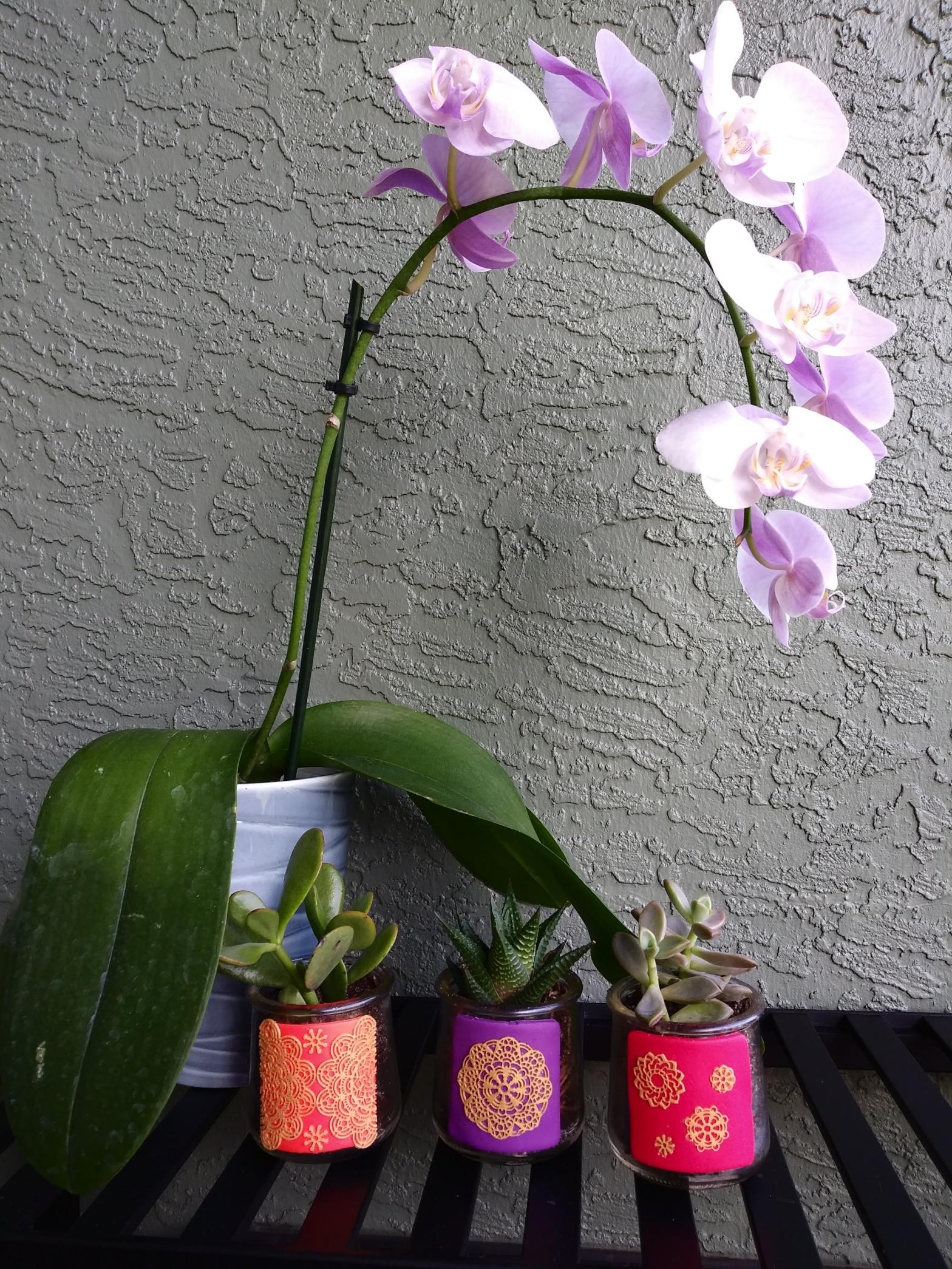 Manadala Succulent Planter